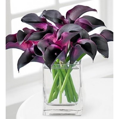 Purple Lover