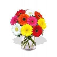 10 Gerbera Vase Bouquet