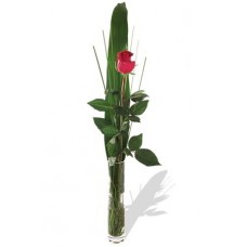 One long stem premium rose in Vase